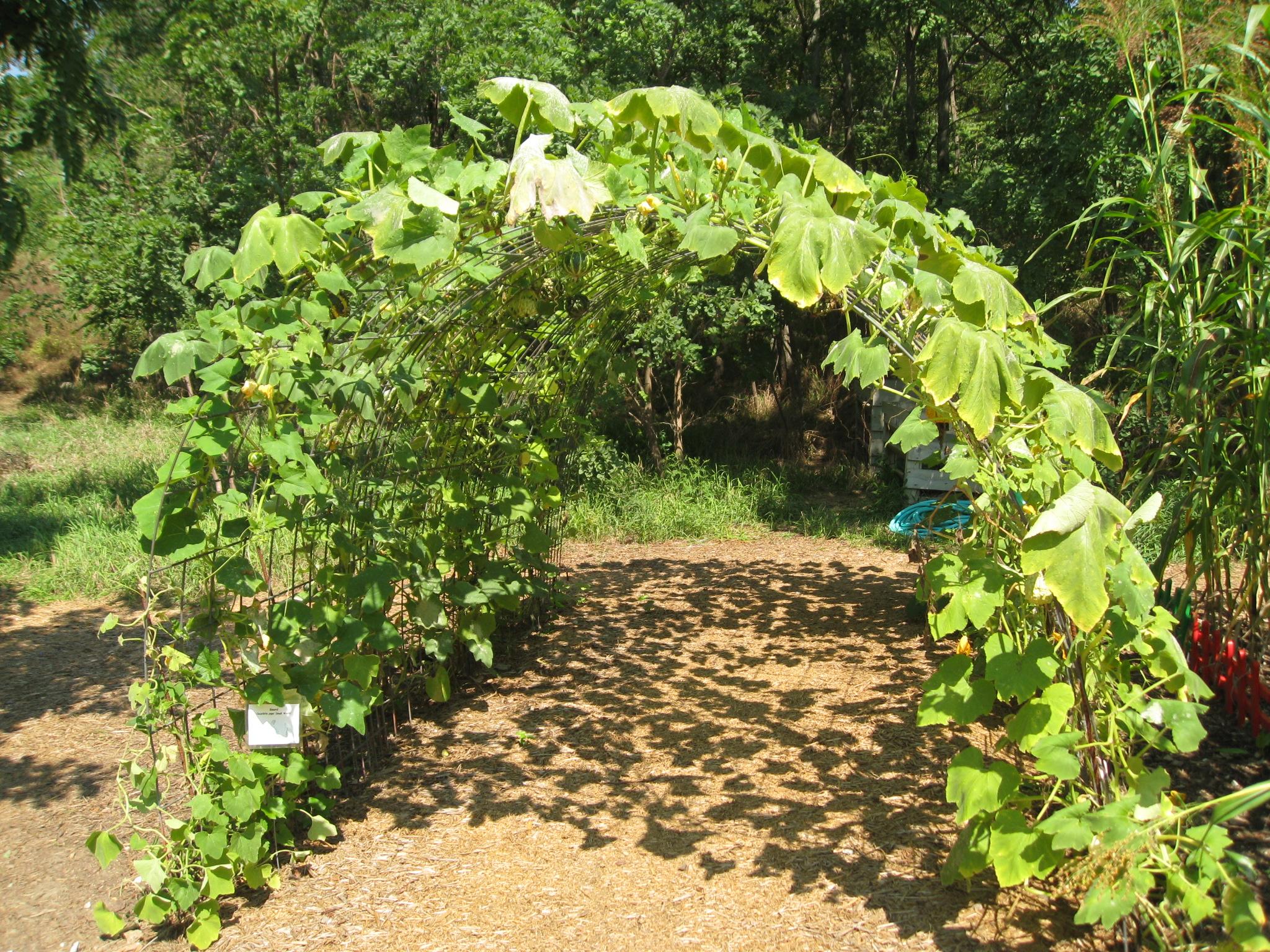 Image Result For Arch Gardening Vegetables